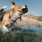 chien-eau